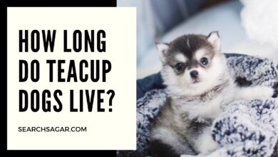 Photo of How long do teacup dogs live?