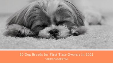 Photo of 10 Dog Breeds for First Time Owners in 2021