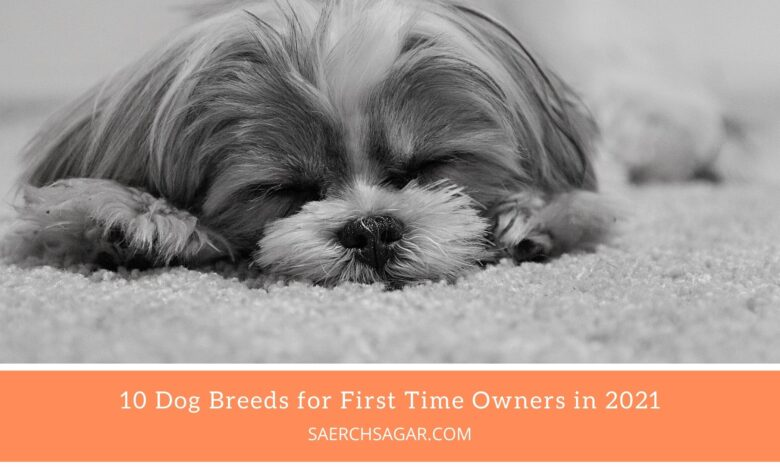 10 Dog Breeds for First Time Owners in 2021