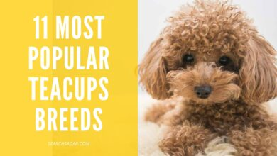 Photo of 11 Most Popular Teacups Breeds