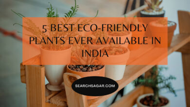 Photo of 5 Best Eco-Friendly Plants Ever Available in India