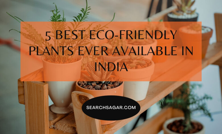 5 Best Eco-Friendly Plants Ever Available in India