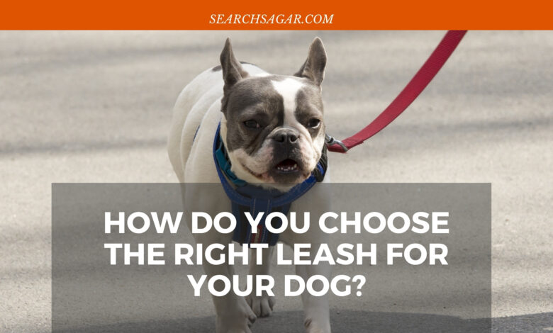 How Do You Choose The Right Leash For Your Dog