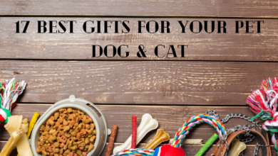 Photo of 17 Best Gifts For You Pet Dog or Cat